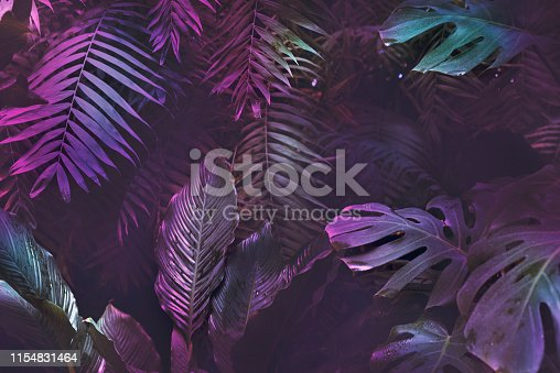 Bright neon tropical palm background leaves pink and dark jungle texture, copy space, foliage backdrop