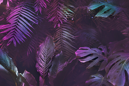 Bright neon tropical palm background leaves pink and dark jungle texture