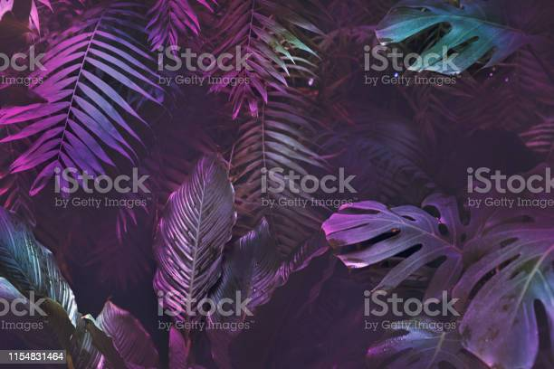 Bright neon tropical palm background leaves pink and dark jungle picture id1154831464?b=1&k=6&m=1154831464&s=612x612&h=nmgwza0fat5kcsk4k4crsuetha wzndu6hrit1nmsre=