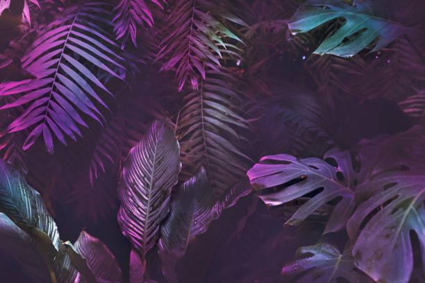 bright neon tropical palm background leaves pink and dark jungle texture - влажный стоковые фото и изображения