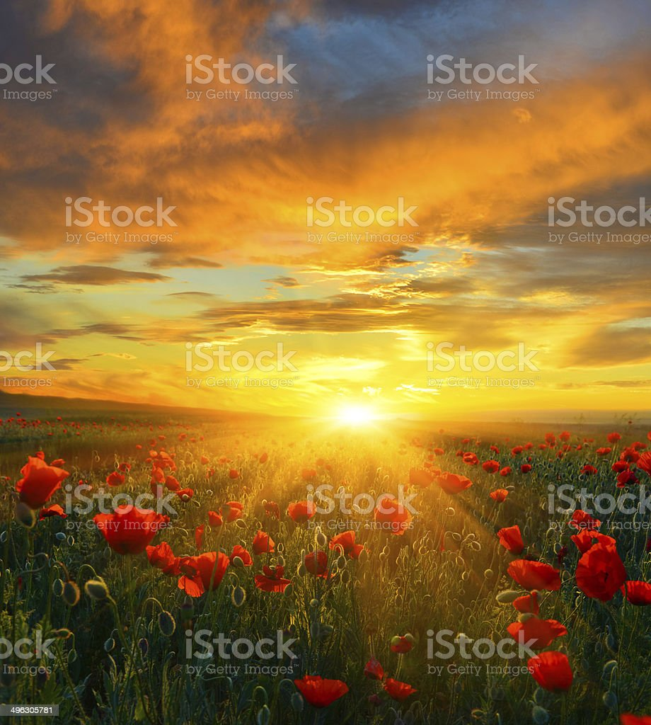 Bright New Day stock photo