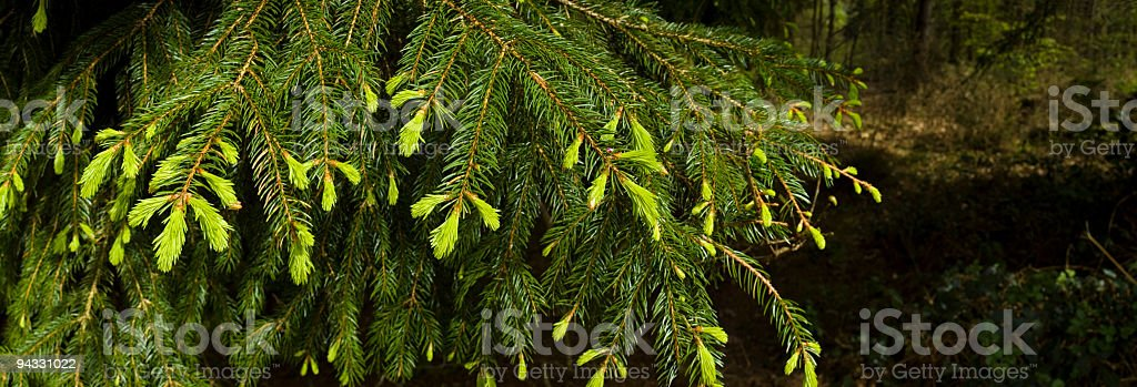 Bright new growth royalty-free stock photo