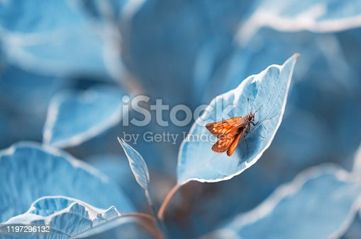 Bright orange butterfly on blue toned leaves. Beautiful spring or summer abstract art background.Selective focus