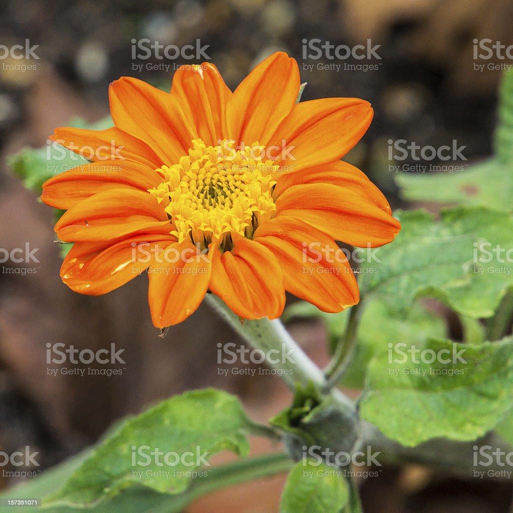 Bright Orange stock photo