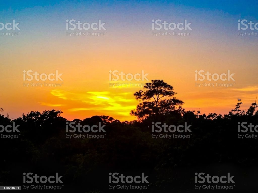 Bright orange sunset and silhouettes of trees stock photo