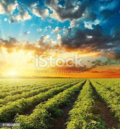 istock bright orange sunset in dramatic sky over green field 619644820