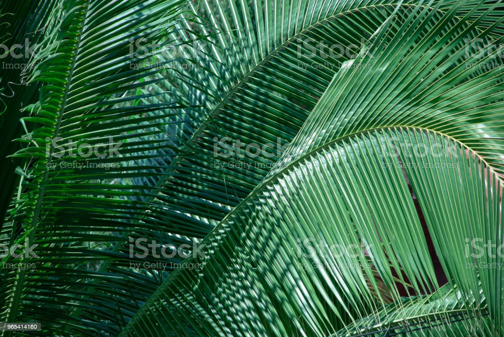 Bright palm branches zbiór zdjęć royalty-free