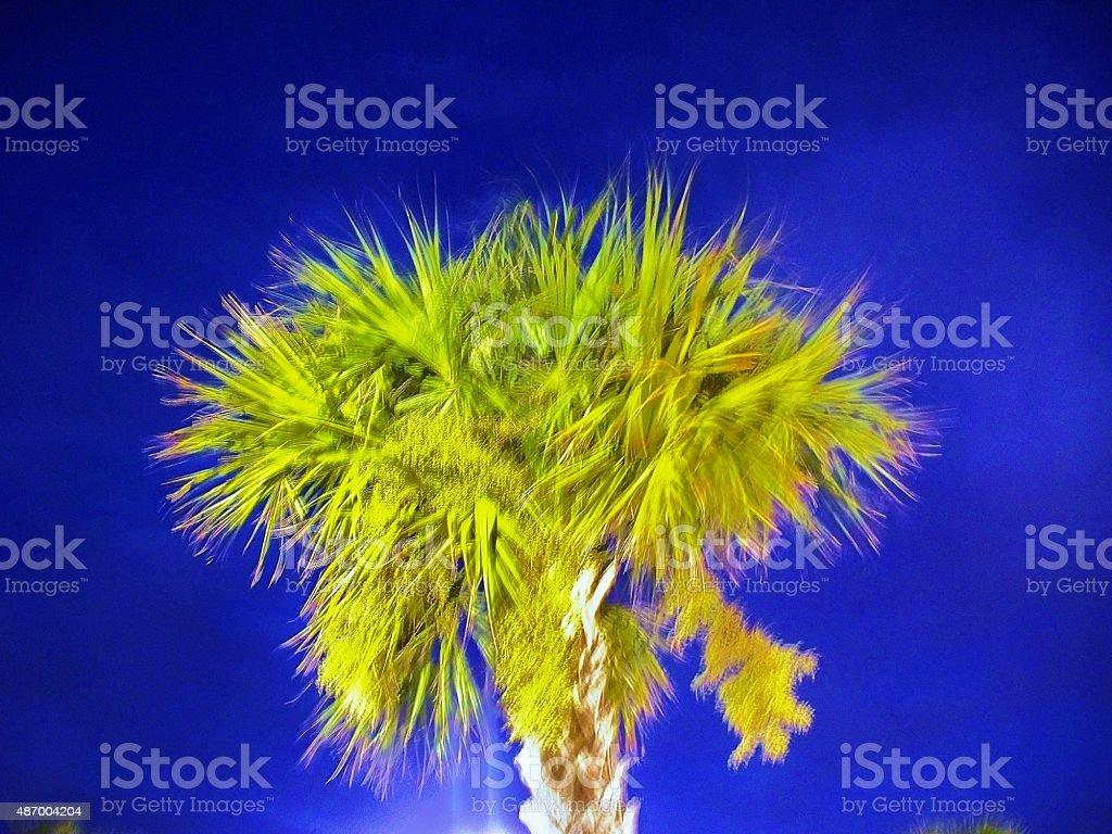 Bright Palm stock photo