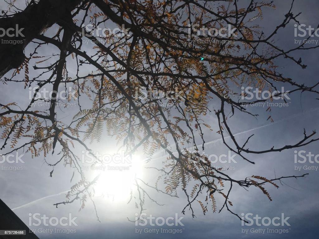 Bright stock photo