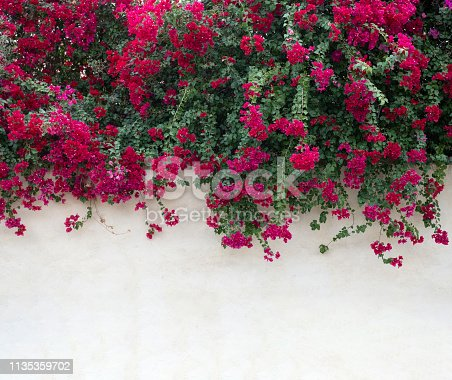 Bright pink flowers above an empty white wall