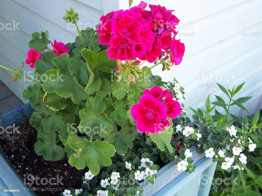 Bouquet shape of flowers in the flower box.