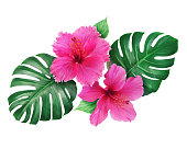 istock Bright pink hibiscus flowers with monstera leaves isolated on white background 1001286696
