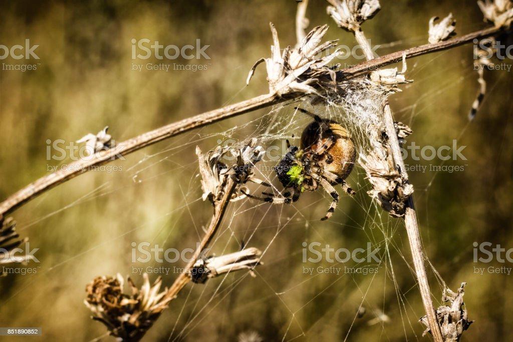 bright predatory spider wove trap stock photo