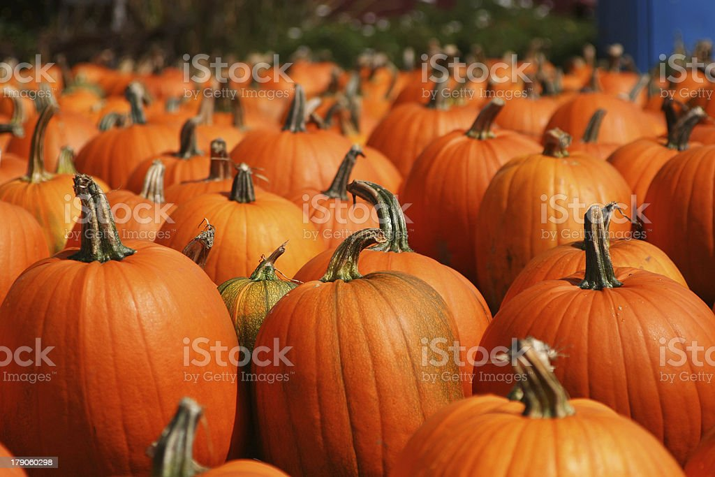 Bright pumpkins autumn outdoor still life royalty-free stock photo