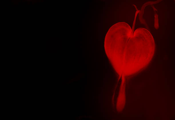 Bright red heart on a black background. Valentine's Day. stock photo