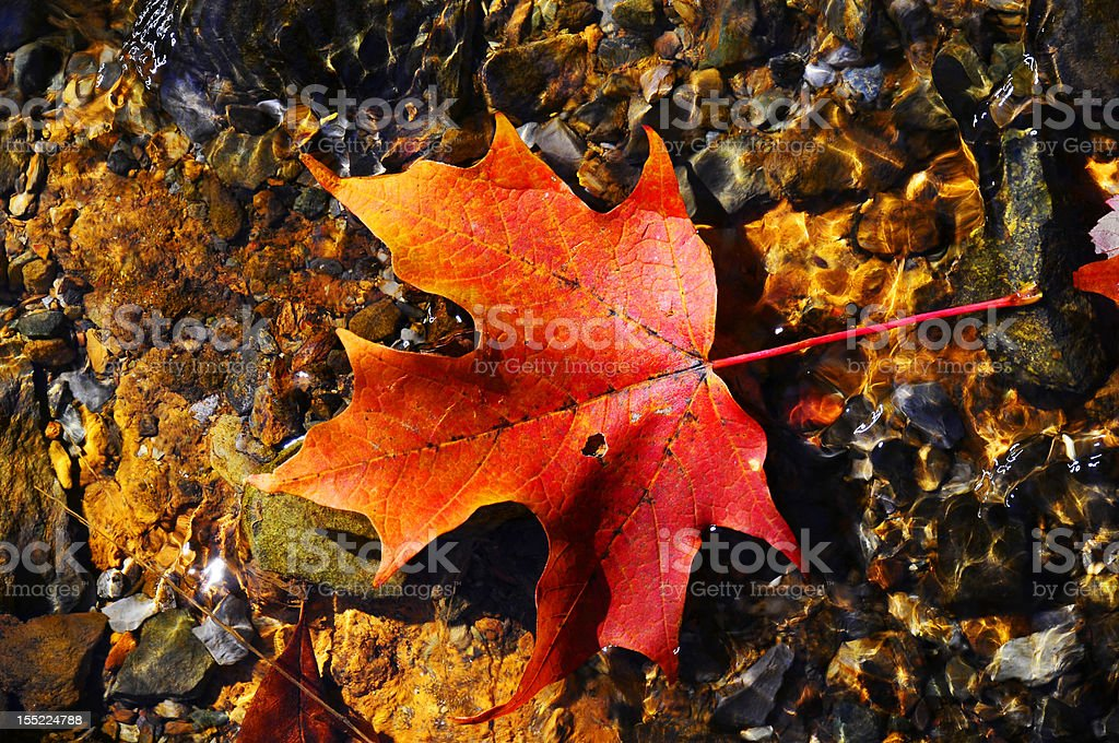 Bright red leaf floating in clear water Photo of one red leaf floating in the water of a creek in Virginia at the Shenandoah National Park Abstract Stock Photo