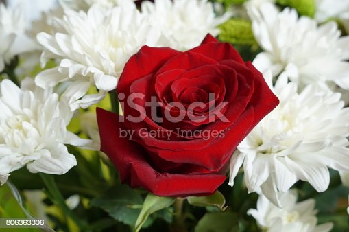 Bright red rose and white daisies