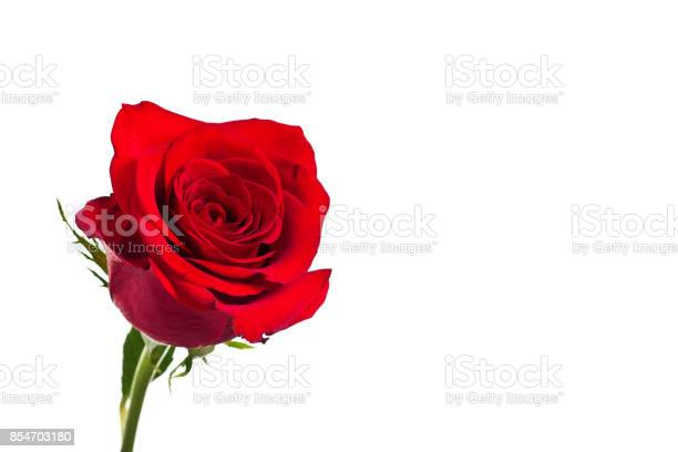 Bright red rose flower isolated on white background for decoration picture id854703180?b=1&k=6&m=854703180&s=612x612&h=ul6hsvqvcgfebvn9pefy2hfrcguzwx5tlj4q3p0sd0k=