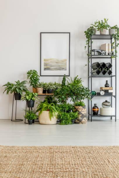 helles zimmer mit pflanzen gefüllt - uhrenhalter stock-fotos und bilder