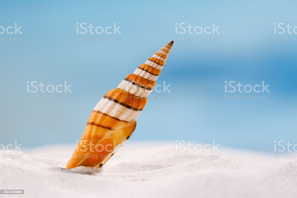 bright  sea shell on white beach sand stock photo