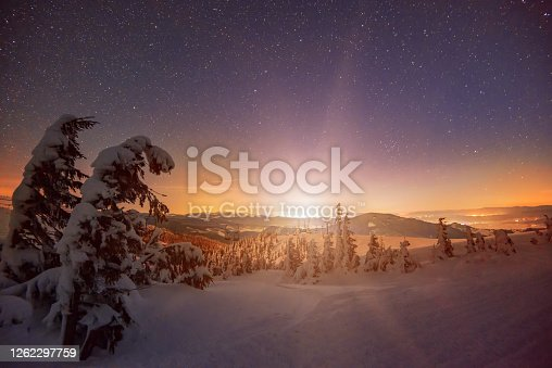 Beautiful snow-covered landscape, bright slender green tall spruce trees grow on a hill against the backdrop of a mountain and a dark shining starry sky. Winter Nature Beauty Concept. Copyspace