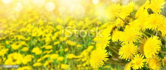 643781968 istock photo Bright spring background. 1069081550