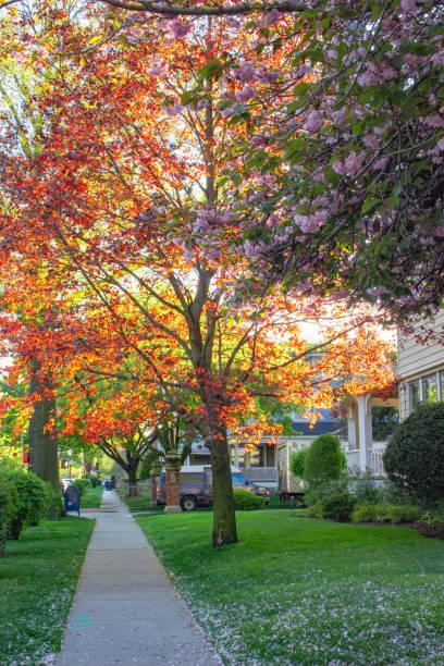 Bright Spring Tree in Brooklyn New York stock photo