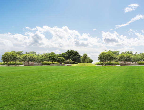 Bright summer sunny day in park with green fresh grass and trees. Public Park, Tree, Grass, Sky, Lawn treelined stock pictures, royalty-free photos & images