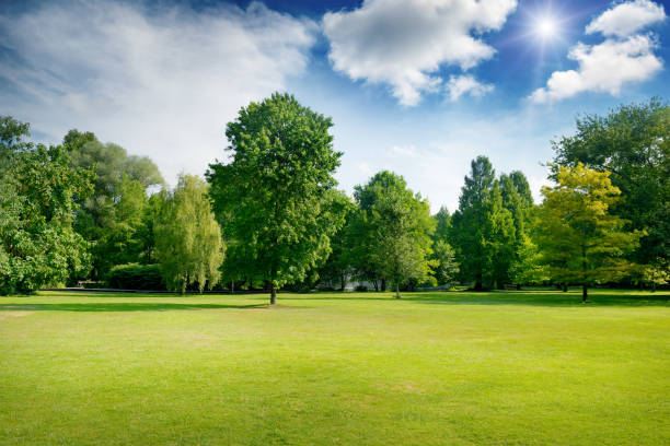 bright summer sunny day in park with green fresh grass and trees. - public park stock photos and pictures