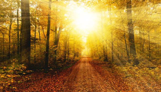 Helle Sonne im Herbst forest – Foto