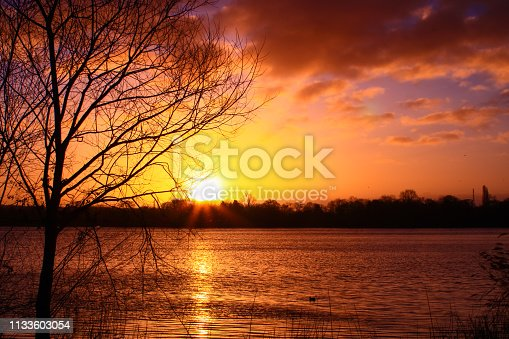 Silhouette of a leafless tree at the foot of the water at sunset