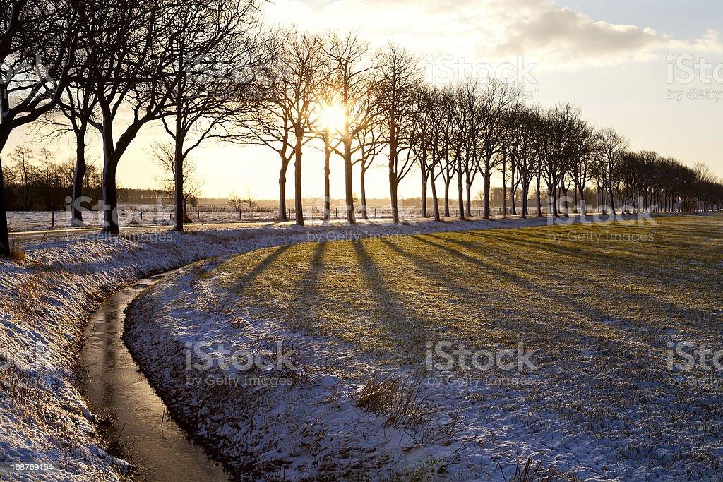 bright sunbeams through tree royalty-free stock photo