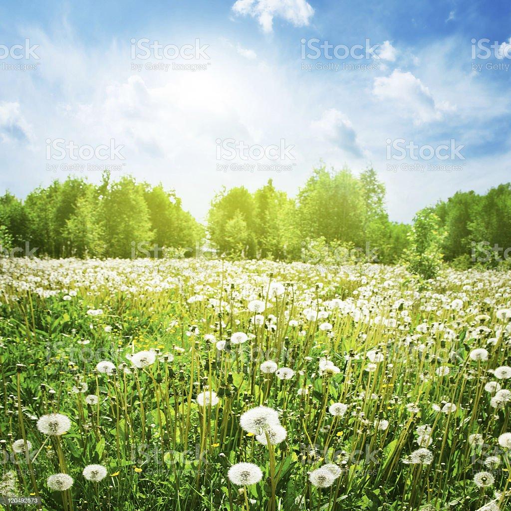 Bright sunny day. royalty-free stock photo