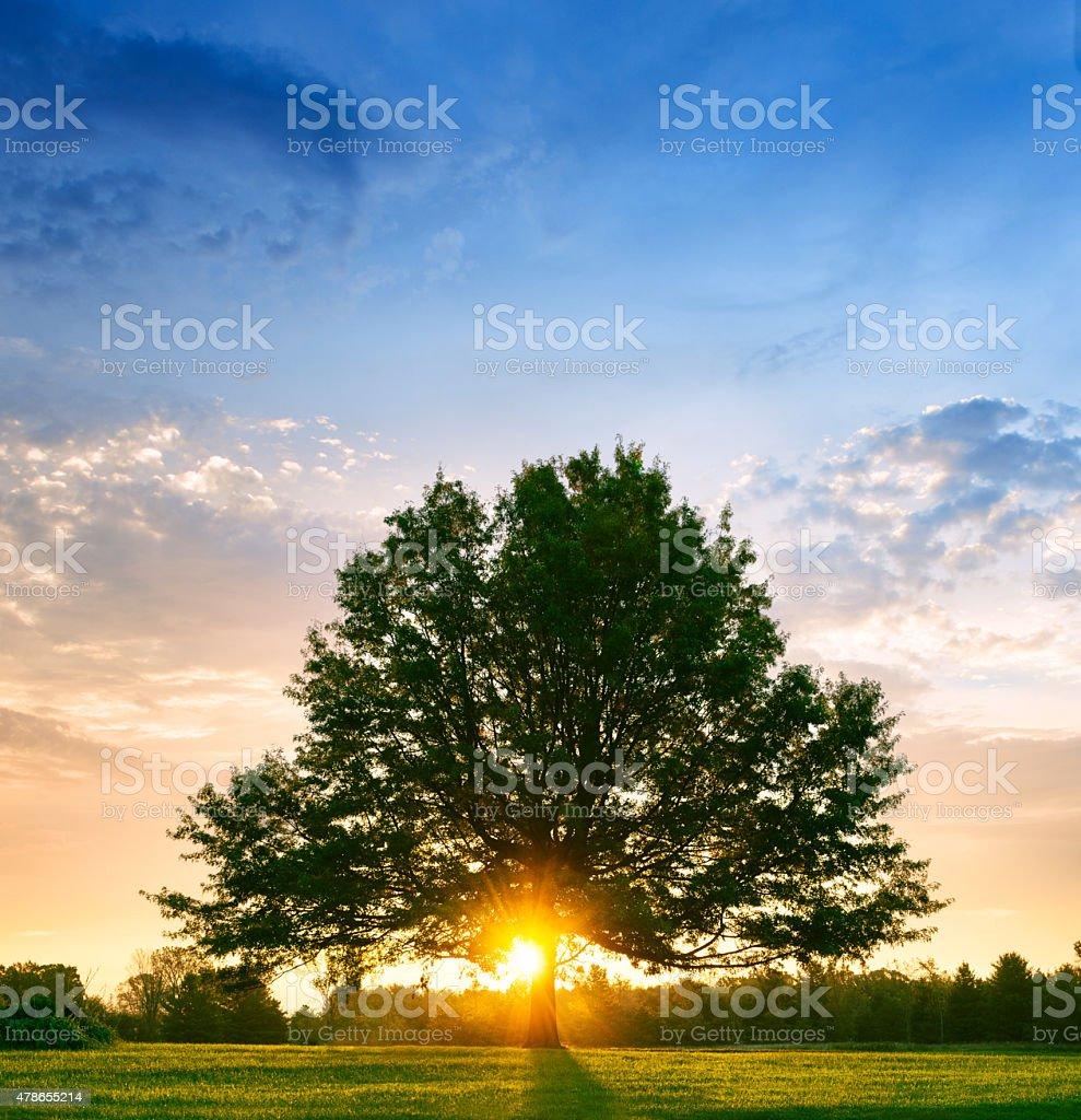 Bright sunrise behind lone tree stock photo