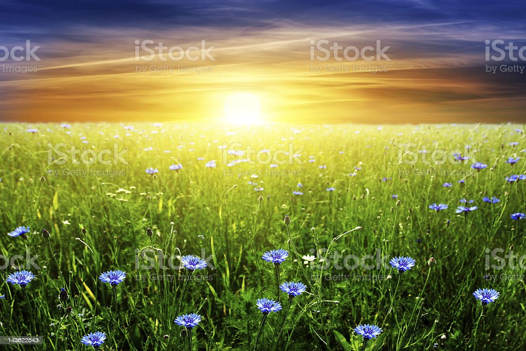 Bright sunset sky over field. royalty-free stock photo