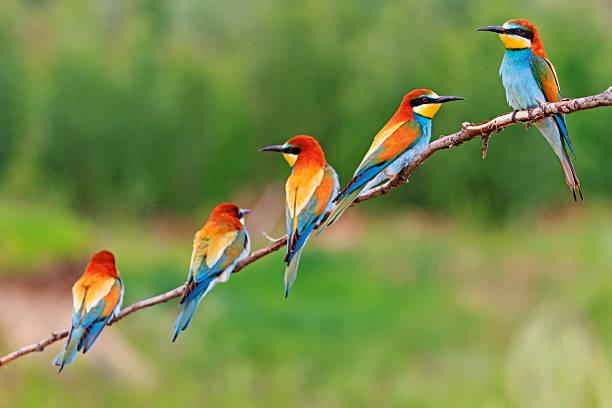 luminosa squadra leader - osservare gli uccelli foto e immagini stock