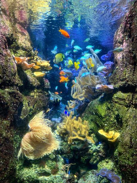 Bright Tropical fish and coral. stock photo