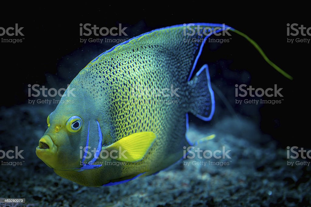Bright tropical fish stock photo