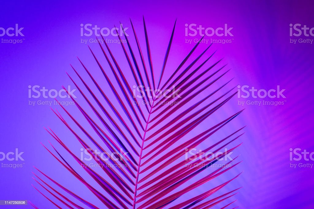 Bright Tropical Leaves Of Paradise Palm Leaves In Neon Light Stock Photo Download Image Now Istock Free for commercial use no attribution required high quality images. https www istockphoto com photo bright tropical leaves of paradise palm leaves in neon light gm1147250506 309383799