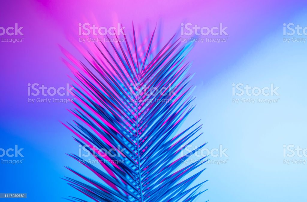 Bright Tropical Leaves Of Paradise Palm Leaves In Neon Light Stock Photo Download Image Now Istock Rectangle green neon frame on tropical leaf background vector. https www istockphoto com photo bright tropical leaves of paradise palm leaves in neon light gm1147250532 309383807