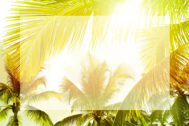 hellen palmen tropischen grün & gelb sonnigen hintergrund - flyer inspiration stock-fotos und bilder