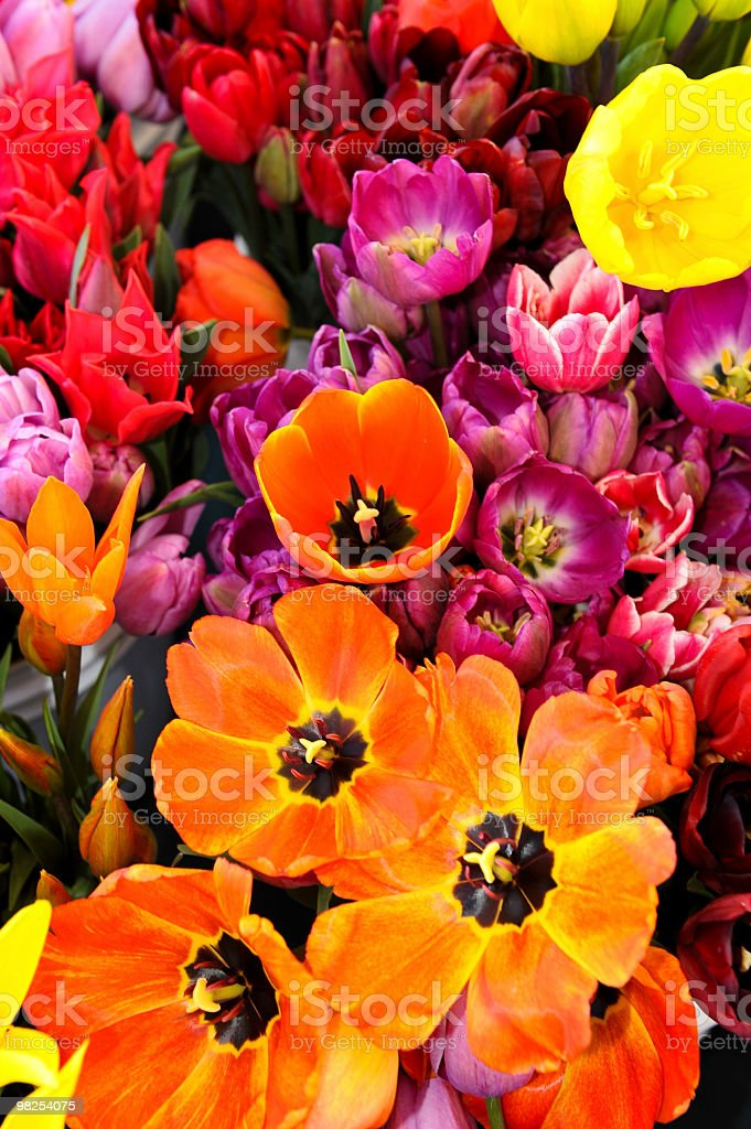 Tulipani luminoso foto stock royalty-free