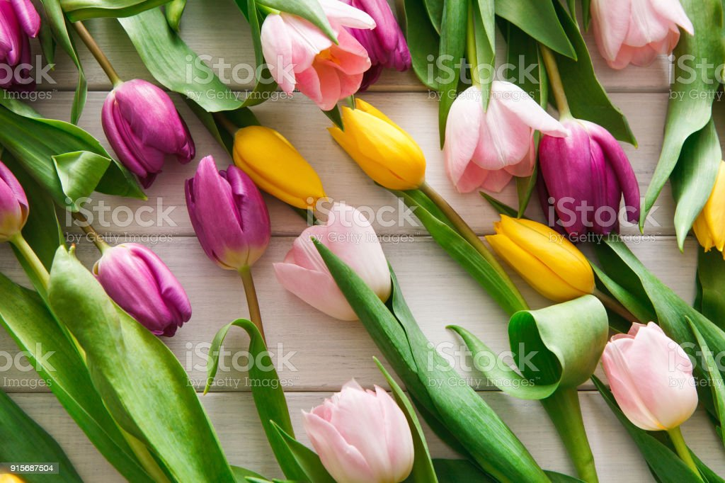 Bright tulips scattered on white wood background stock photo
