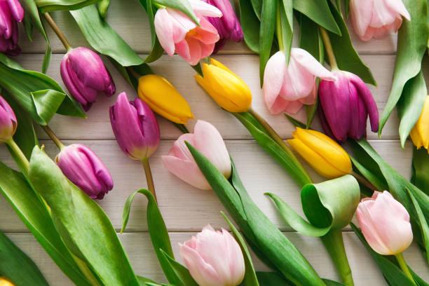 leuchtende tulpen verstreut auf weißem holz hintergrund - tulpe stock-fotos und bilder