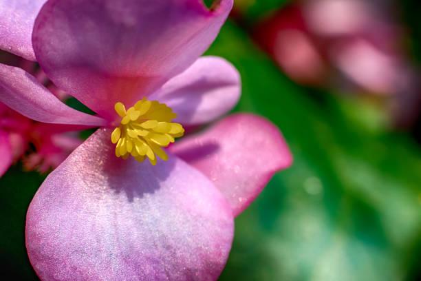 Bright vivid beautiful flowers in bloom stock photo
