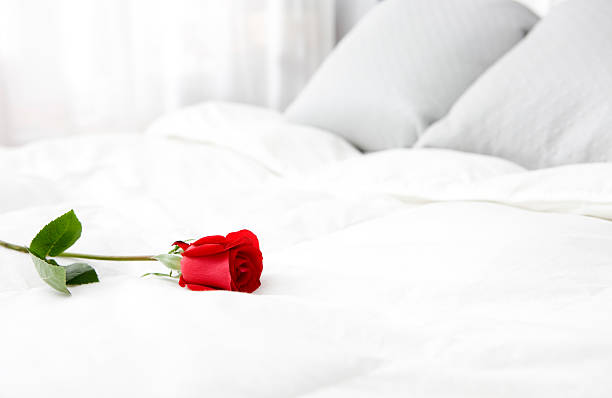 bright white bedroom with single rose, copy space - enkele roos stockfoto's en -beelden