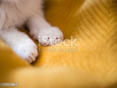 Bright white cat paws. Sleeping on yellow background