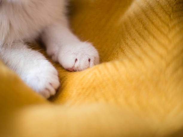 bright white cat paws. sleeping on yellow background, copy space. - kneading stock pictures, royalty-free photos & images