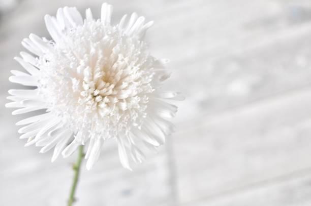Bright White Flower stock photo