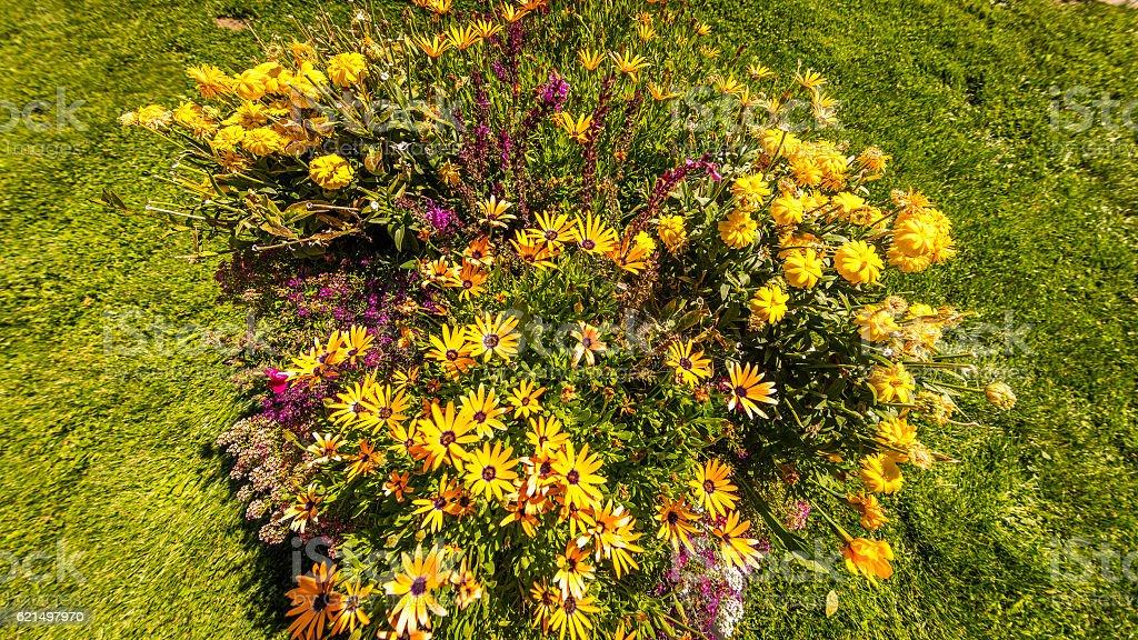 Bright yellow daisy on green grass photo libre de droits